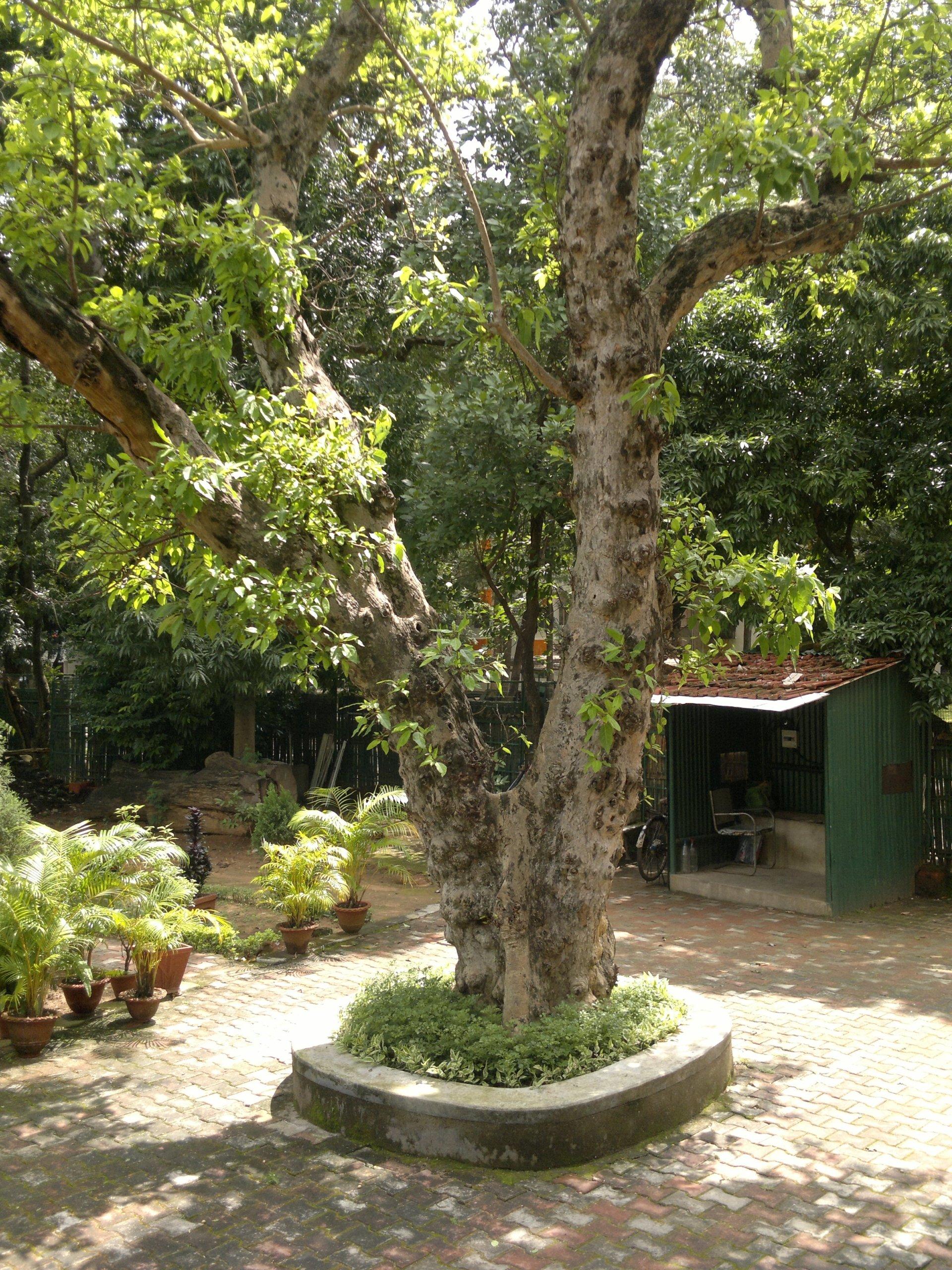 Nakshatra Tree Garden